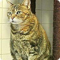 Adopt A Pet :: Prissy - white settlment, TX