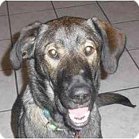 Adopt A Pet :: Java (Flagstaff) - Scottsdale, AZ