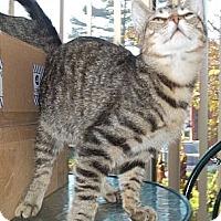 Adopt A Pet :: Brisko - Acme, PA