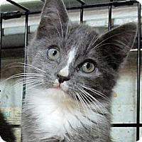 Adopt A Pet :: LaVerne - Seminole, FL