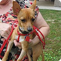 Adopt A Pet :: Lizzie - Kingwood, TX