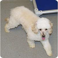 Adopt A Pet :: Valentine - Georgetown, KY