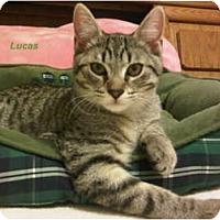 Adopt A Pet :: Lucas - Jacksonville, FL