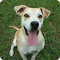 Adopt A Pet :: Mr. Wilson - Williston, FL