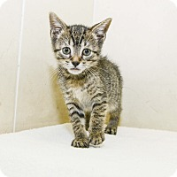 Adopt A Pet :: Petunia - New York, NY