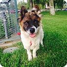 Adopt A Pet :: Shawna