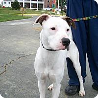 Adopt A Pet :: Zeus - Lancaster, OH