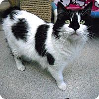 Adopt A Pet :: Phoenix - Newport Beach, CA