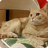 Adopt A Pet :: Hamlet - Colmar, PA