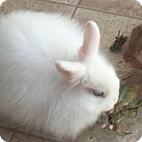 Adopt A Pet :: Hoppy - Conshohocken, PA