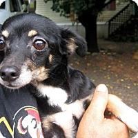 Adopt A Pet :: Mona - Oswego, NY