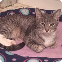 Adopt A Pet :: Nellie - Palatine, IL