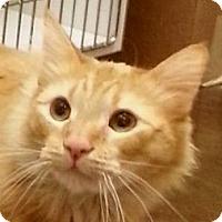 Adopt A Pet :: Adrian Brody - Winchester, CA