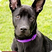 Adopt A Pet :: Chappi - Marina del Rey, CA