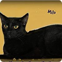 Adopt A Pet :: Milo - Benton, AR