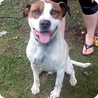 Adopt A Pet :: Dickie - Marlinton, WV