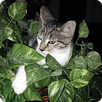 Adopt A Pet :: tunder - millville, NJ