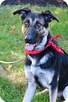 German Shepherd Dog Mix Dog for adoption in New Oxford, Pennsylvania - Cheech