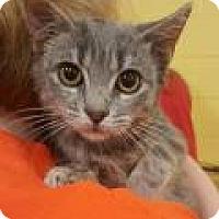Adopt A Pet :: Aspen - Mount Pleasant, SC