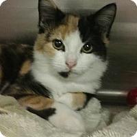 Adopt A Pet :: Pamela - Sherman Oaks, CA