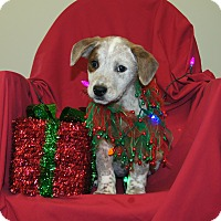 Adopt A Pet :: Heidi ~ ADOPTED! - Brattleboro, VT