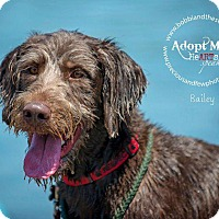 Adopt A Pet :: Bailey - Freeport, NY