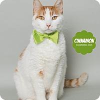 Adopt A Pet :: Cinnamon - Wyandotte, MI