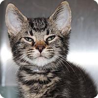 Adopt A Pet :: 23420 - Lucas - Ellicott City, MD