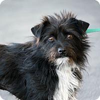 Adopt A Pet :: Jenni - Palmdale, CA