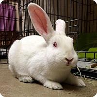 Adopt A Pet :: Rob Lowe - Bellingham, WA