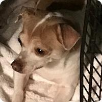 Adopt A Pet :: Candy - Irmo, SC