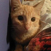 Adopt A Pet :: DORA - Hampton, VA