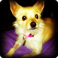 Adopt A Pet :: Ivy - Tijeras, NM