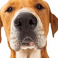 Adopt A Pet :: Cubby - Scottsdale, AZ