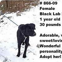 Adopt A Pet :: # 866-09 @ Animal Shelter - Zanesville, OH