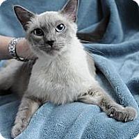 Adopt A Pet :: Brody - Columbus, OH