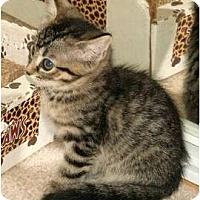 Adopt A Pet :: Thumbelina - Scottsdale, AZ