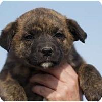 Adopt A Pet :: Blitzen - Providence, RI
