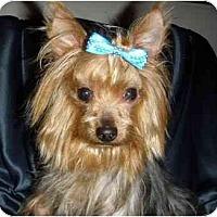 Adopt A Pet :: Spanky - Mooy, AL