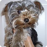 Adopt A Pet :: Jackson #2 - Orange, CA