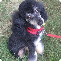 Adopt A Pet :: Samuel Jackson - North Little Rock, AR