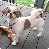 Adopt A Pet :: Digby - LEXINGTON, KY