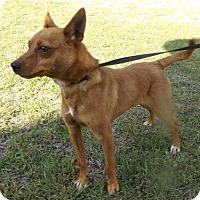Adopt A Pet :: Cory - Irmo, SC