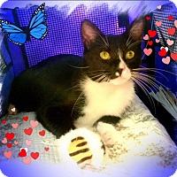 Adopt A Pet :: Bo - Harrisburg, NC
