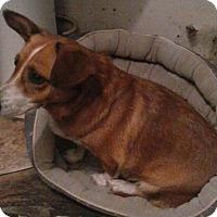 Adopt A Pet :: Madelyn - Midlothian, VA
