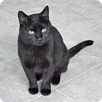 Adopt A Pet :: Mikey - Mississauga, Ontario, ON