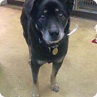 Adopt A Pet :: Uncle - Oak Ridge, NJ