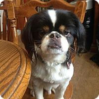 Adopt A Pet :: Finnigan - Bristol, CT