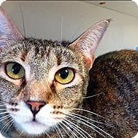 Adopt A Pet :: Dessey - Sherwood, OR