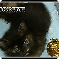 Adopt A Pet :: bernadette - Muskegon, MI